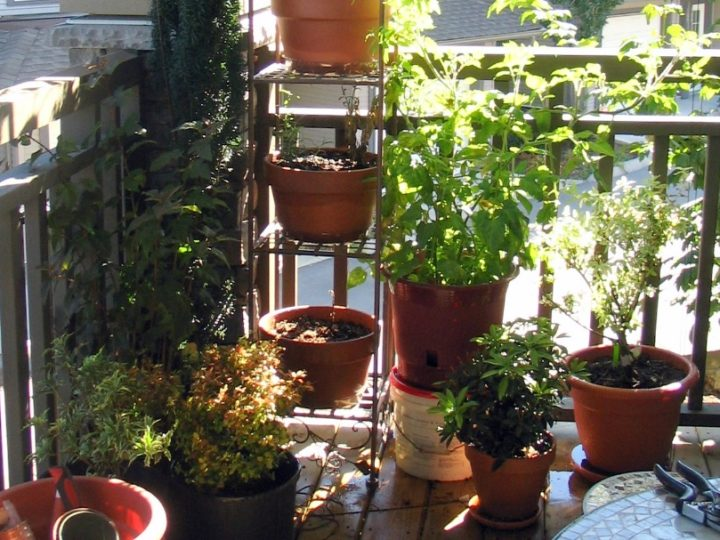 Best Plants for Balcony with LOW SUNLIGHT