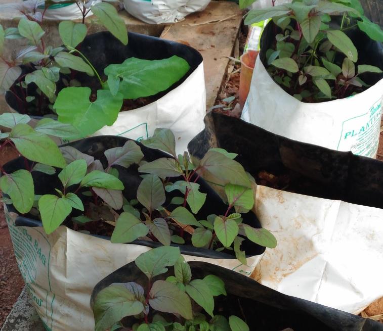 Grow Bags: Suitable for Seasonal Vegetables in Kitchen Gardening
