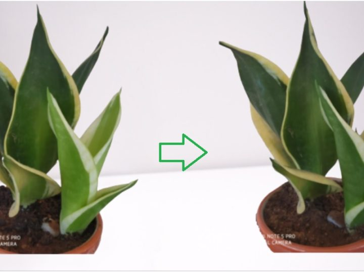 Importance of Sunlight for Indoor Plants