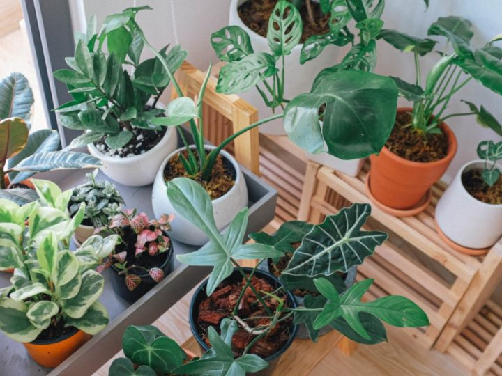 Indoor Plants Care Tips