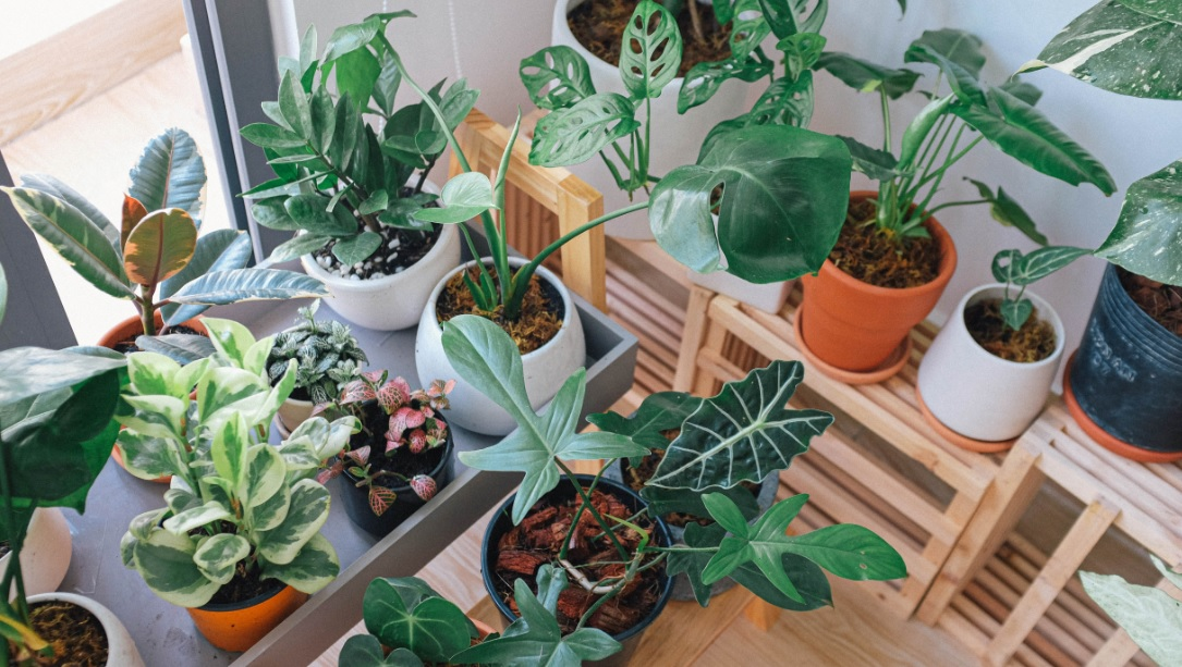10 Important tips to maintain your indoor plants