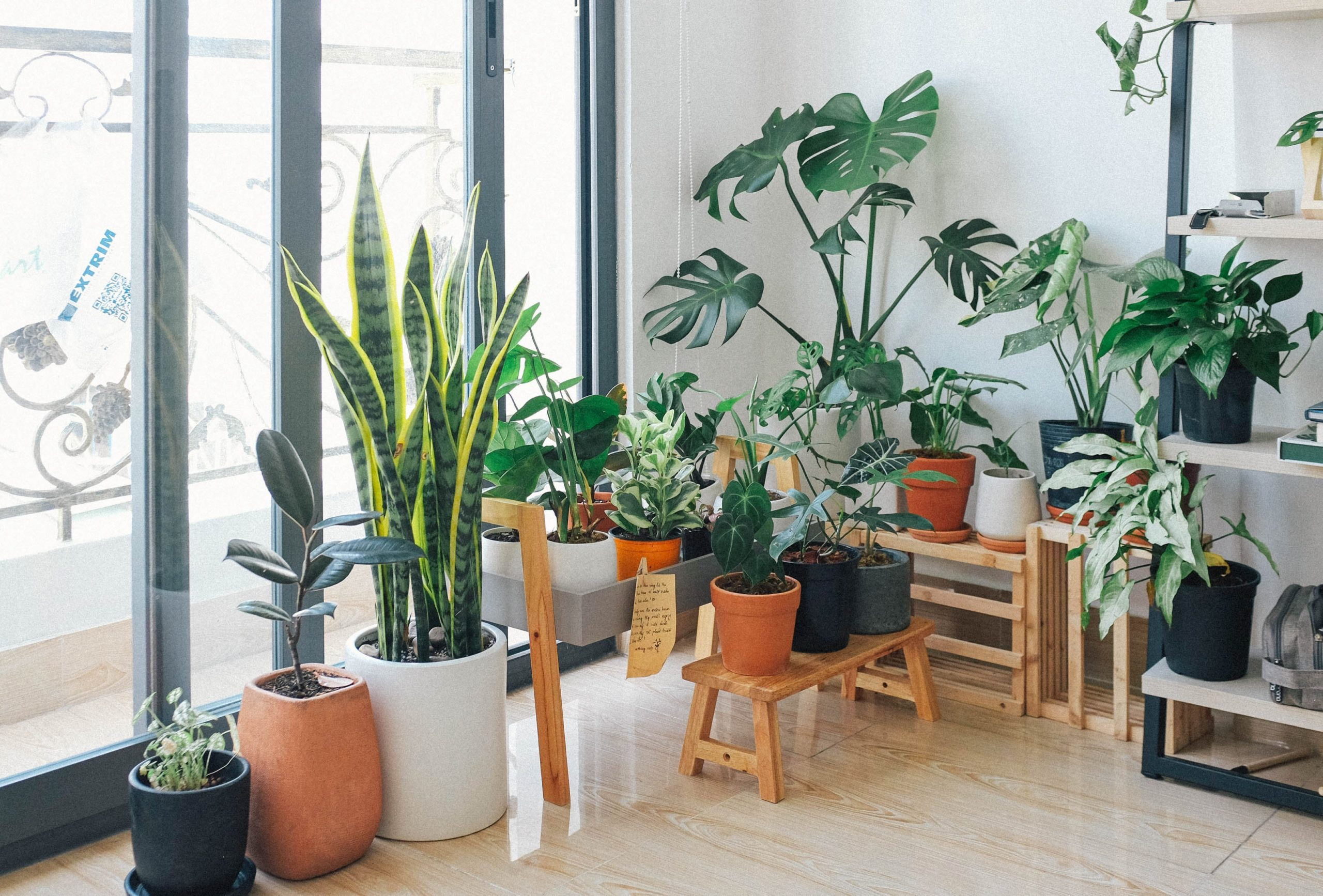 10 Best Indoor Plants for your home and office
