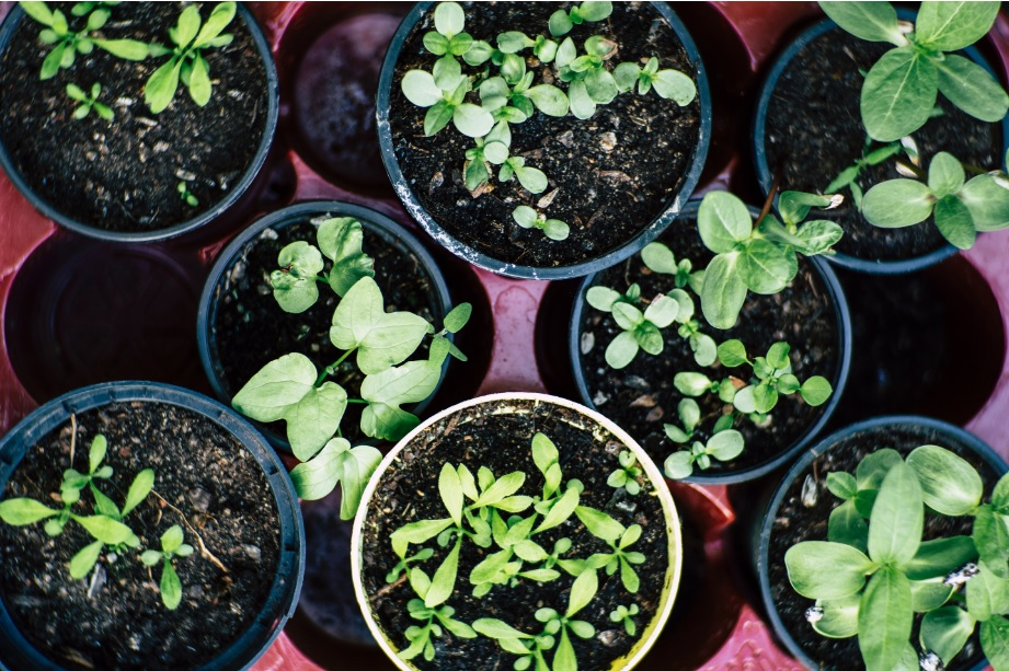 What is kitchen gardening? Why is it a good concept?