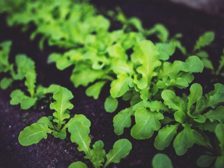 Kitchen Gardening Basics