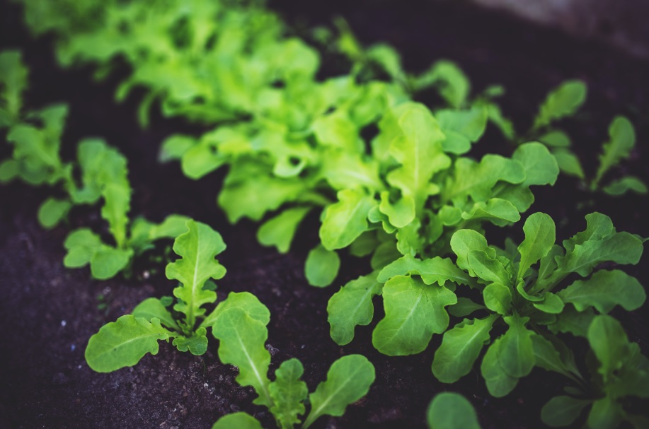 Kitchen Gardening: Things to know before you start
