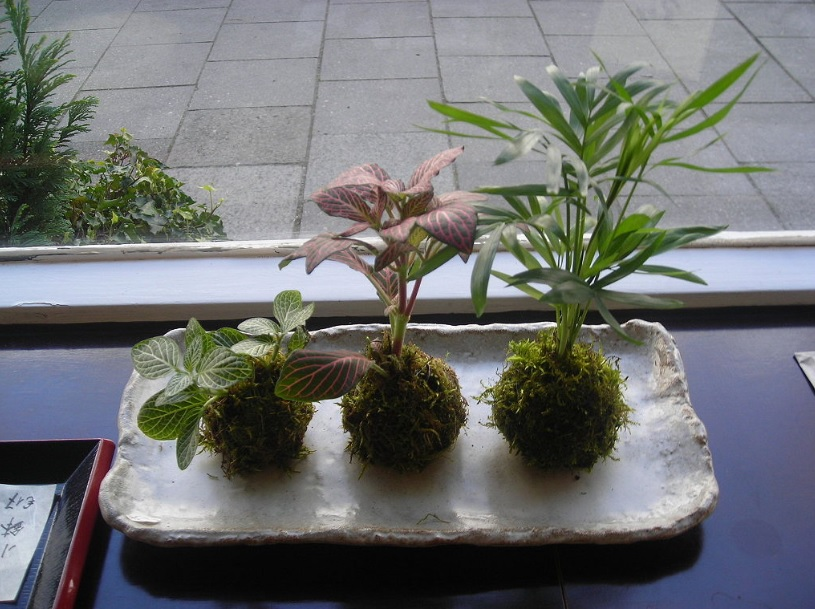 Kokedama: No need for pot just grow plant in soil and moss
