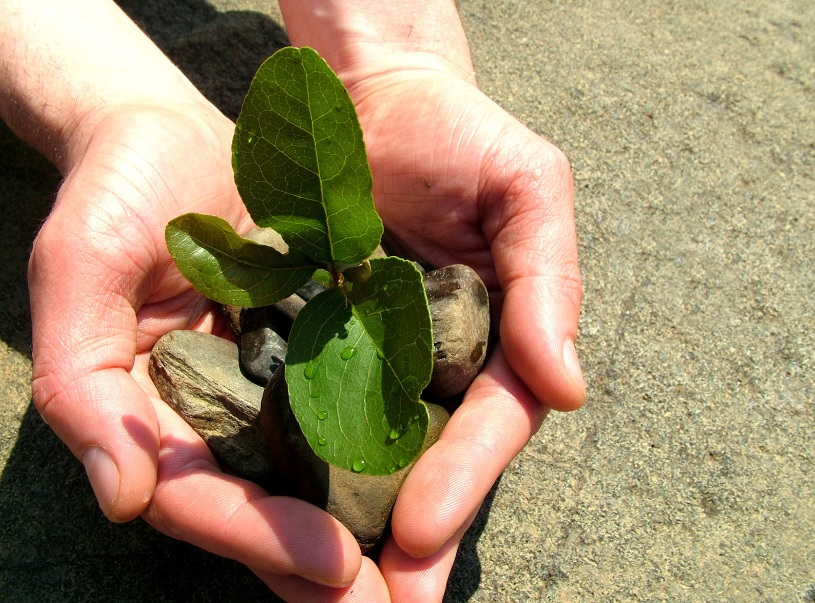 Keep propagating plants: Reduces budget and make gardening more fun