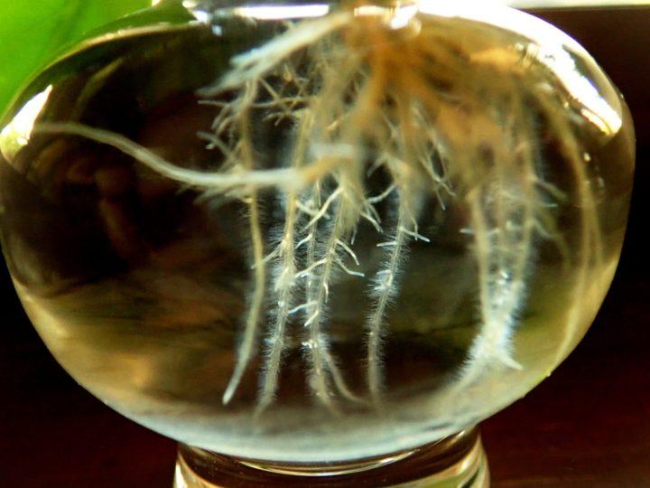Plants Propagation in water