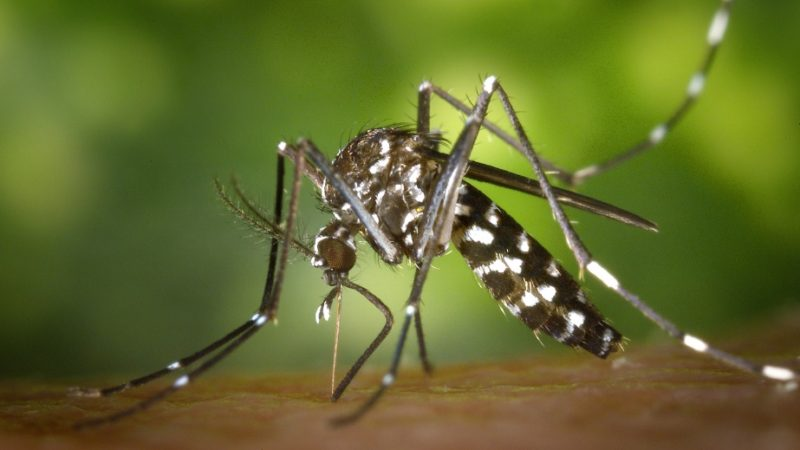 Plants that are mosquito repellent