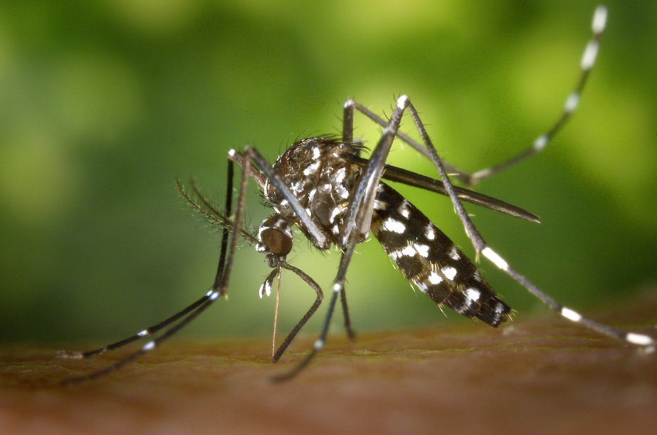 Plants which are natural mosquito repellent