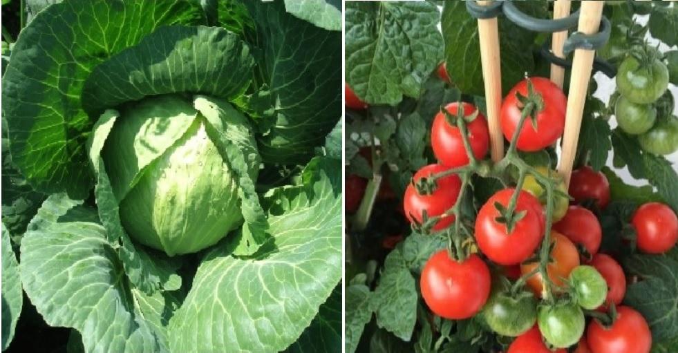 Companion Gardening: 5 Combination of Plants for Kitchen Garden
