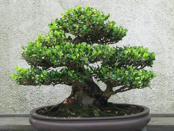 Bonsai - Creative Gardening