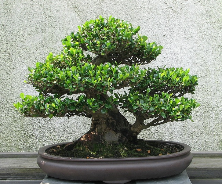 Bonsai: Small tree in a pot that mimic full size tree in terms of shape and scale