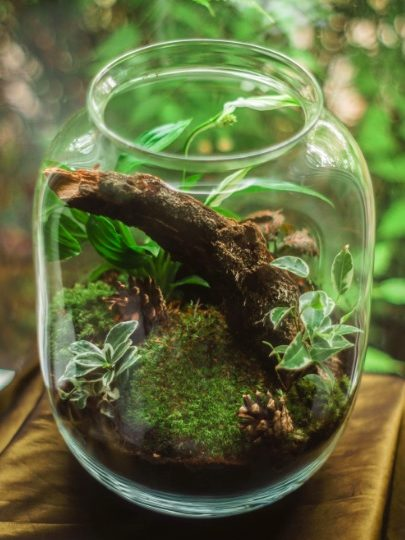 Terrarium - Creative Gardening