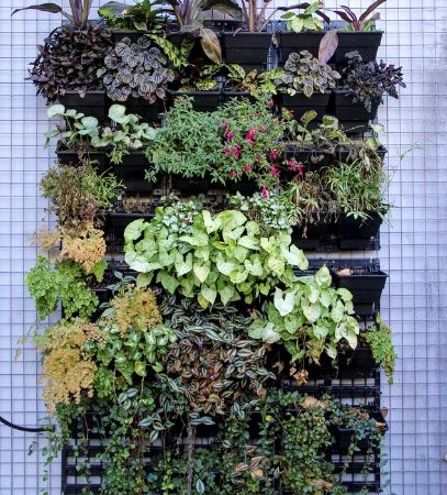 Vertical Gardening: Grow more plants in less space