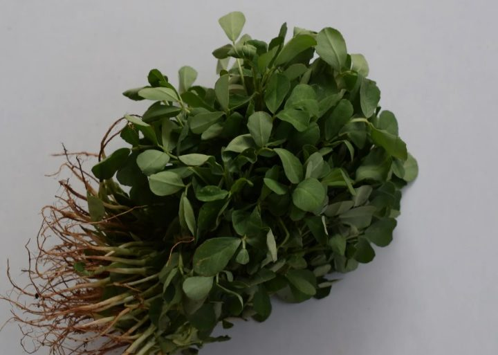 Methi: Low care and can be used as herb, vegetable or spices