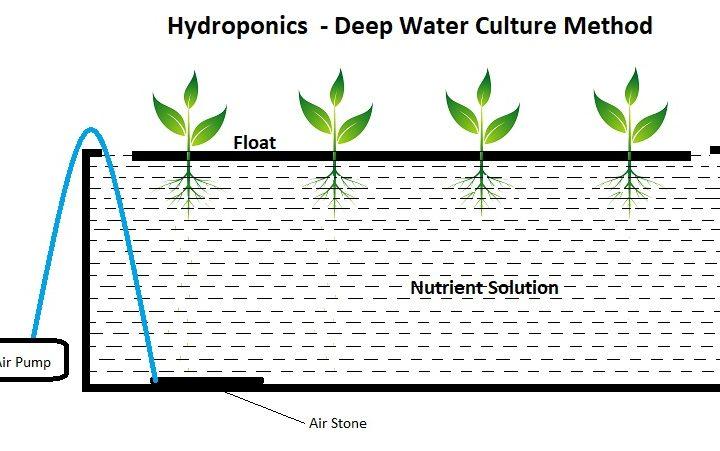 Deep Water Culture Method