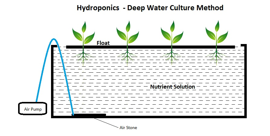 Deep Water Culture method – Best Hydroponics Systems for the Beginners