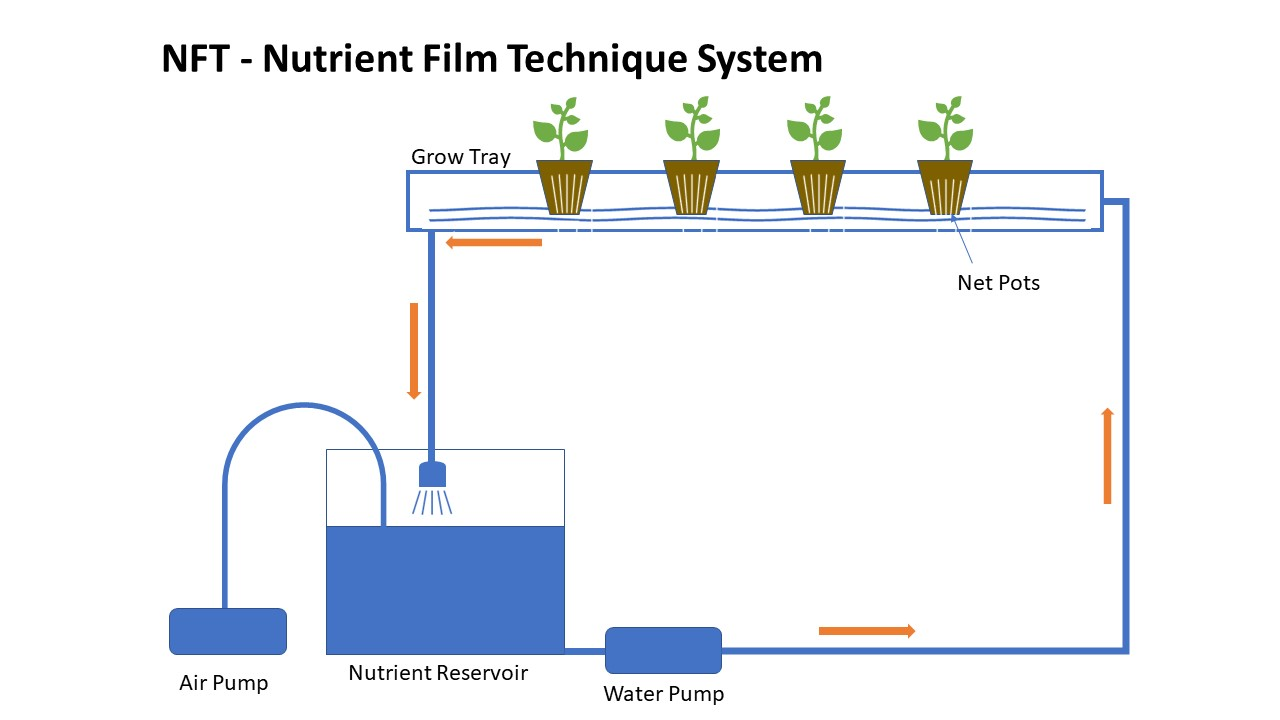 NFT Hydroponic System: Hugely popular home hydroponic System