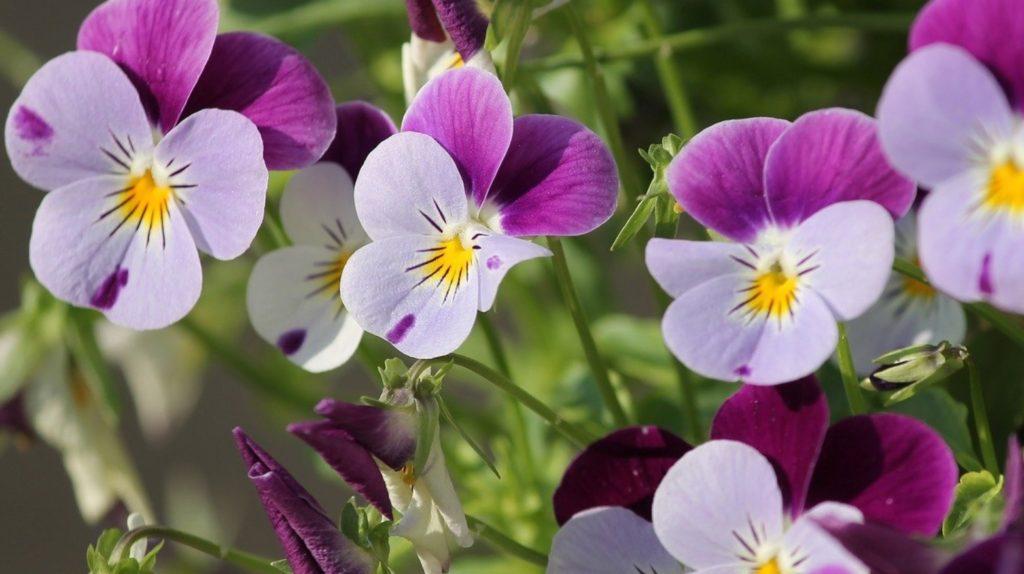 winter flowering plants in india