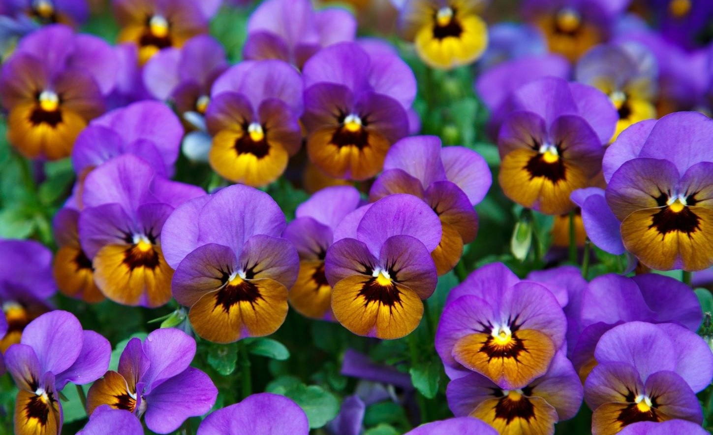 10 Best Winter Flowering Plants in India: Details and Care