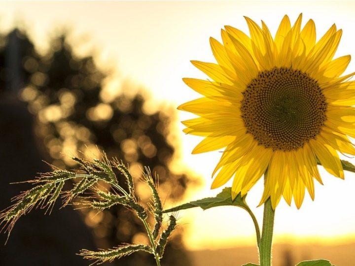 Best Summer Flowering Plants in India
