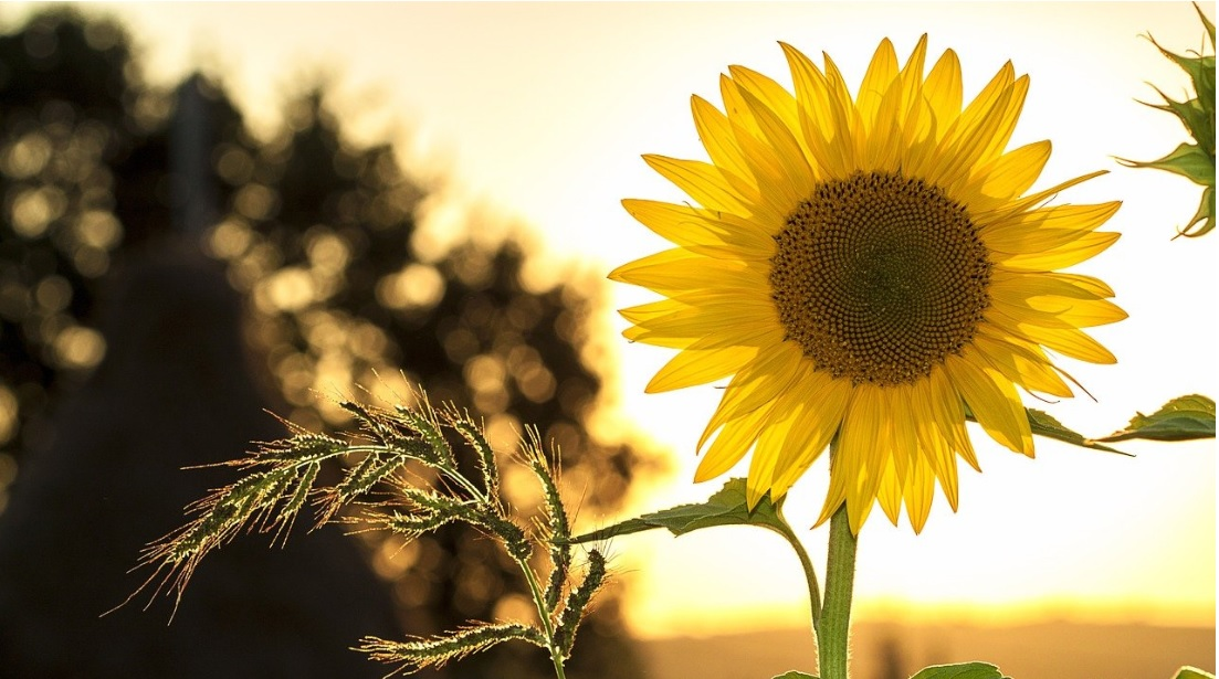 10 Best Summer Flowering Plants in India: Details and Care
