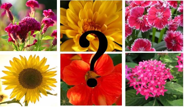 Flowering Quiz
