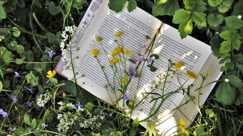 Gardening Quiz