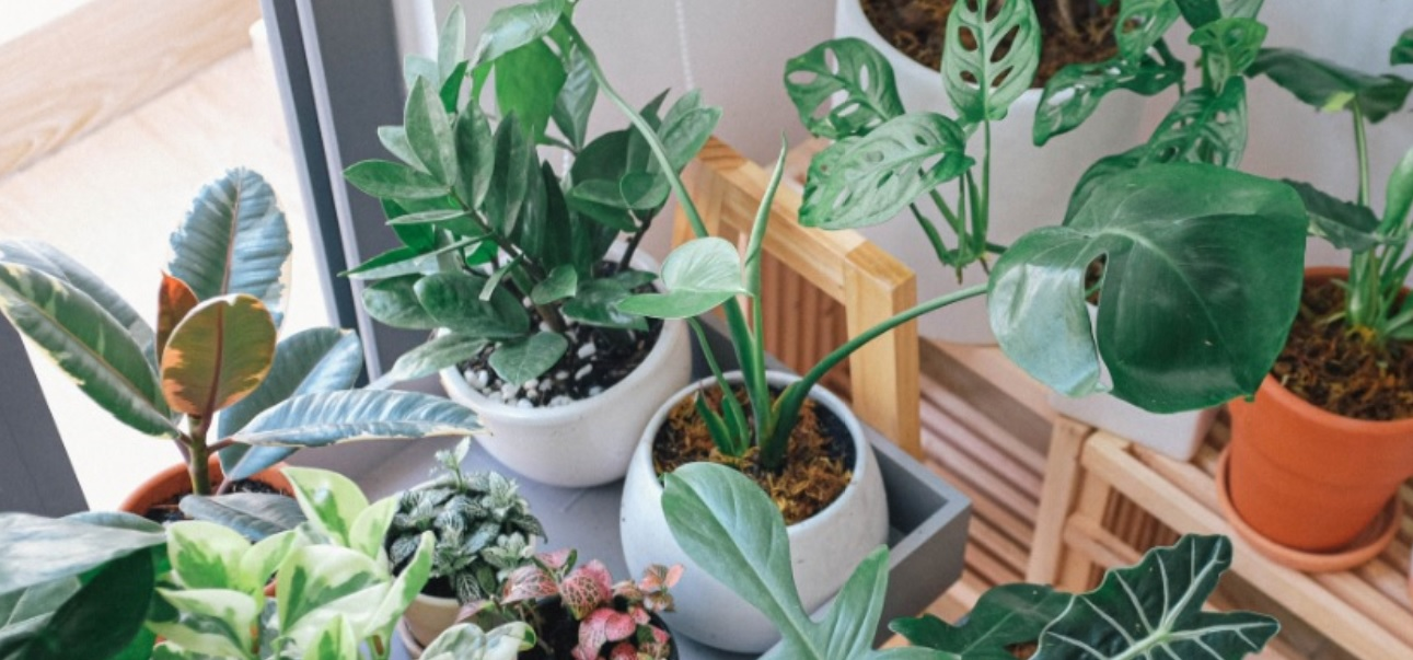 15 Best Indoor Ornamental Plants: Make your surrounding better