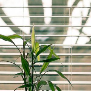 AC Room Plants
